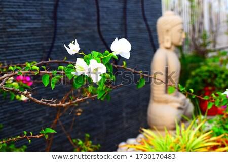 criança · criança · menina · primavera · flores · amarelas · campo - foto stock © dashapetrenko