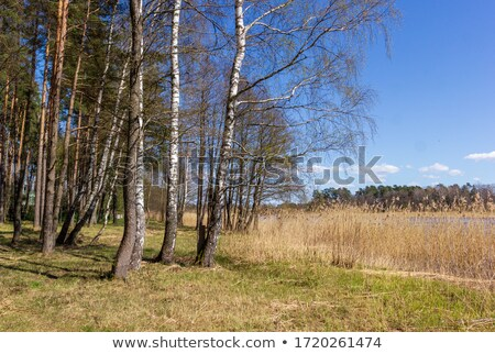 family with birch and water Stock photo © Paha_L