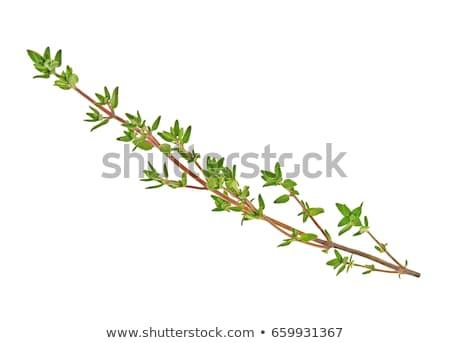 fraîches · branche · blanche · alimentaire · feuille · santé - photo stock © italianestro