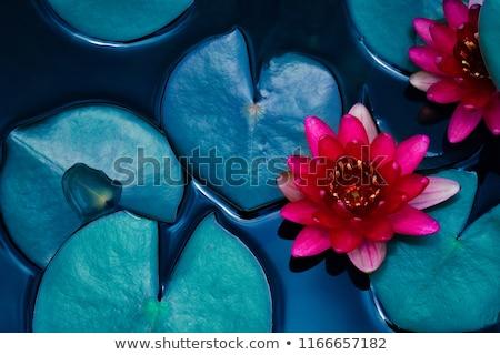 Symbol of Buddhism- Lotus flower Stock photo © shawlinmohd