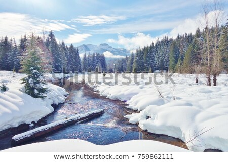 winter scene on the creek stock photo © alex_grichenko