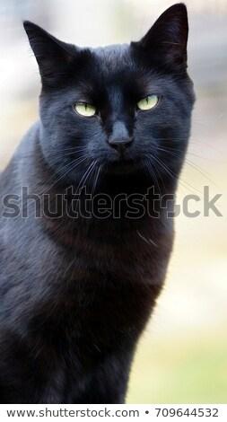 black cat with green eyes Stock photo © mayboro1964