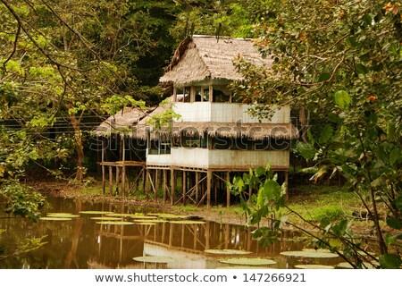 домой Amazon деревне крыши rainforest Перу Сток-фото © wildnerdpix