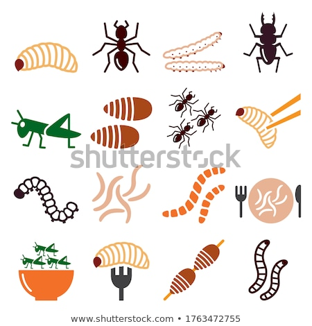 Meal worms Stock photo © stoonn