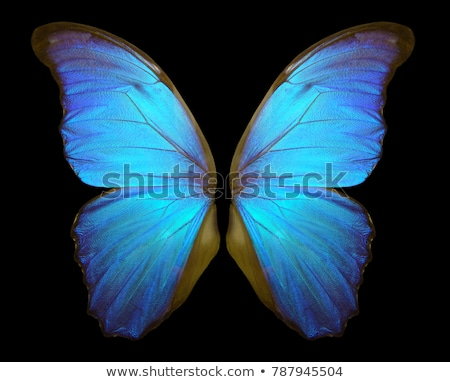 Blue and Black Butterfly Stock photo © rhamm