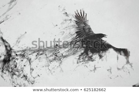 Voador corvo preto corvo asa vôo Foto stock © manfredxy
