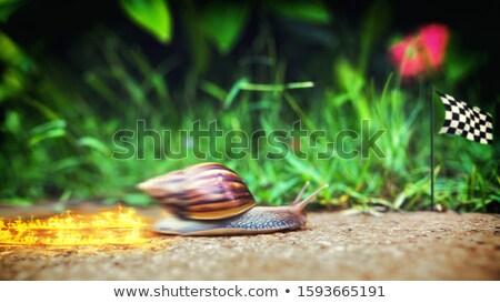 Gyors csiga sebesség kagyló rakéta gyorsítórakéta Stock fotó © Lightsource