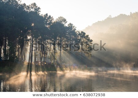 light spectrum through pine trees Stock photo © sirylok