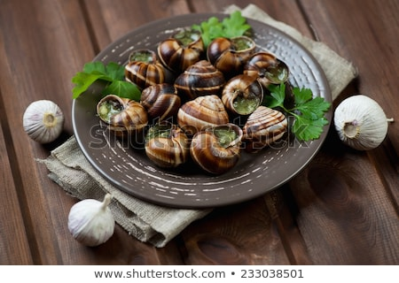 bourgogne snail, french gastronomy Stock photo © M-studio