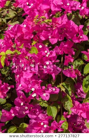 tropicali · giardino · Egitto · fiore · erba · sole - foto d'archivio © master1305