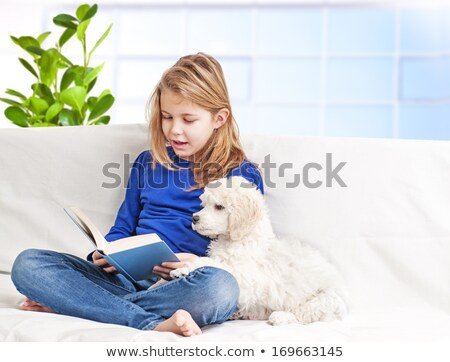 puppu poodle and child Stock photo © cynoclub