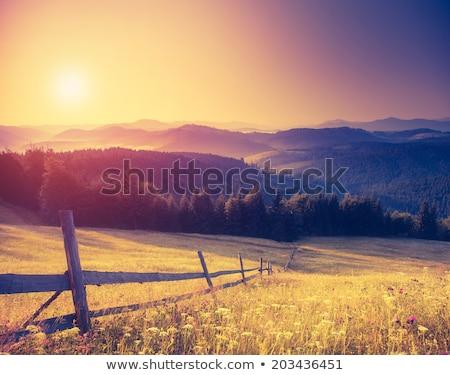 tejes · út · fa · elképesztő · vidéki · jelenet · csillagos · ég - stock fotó © goinyk