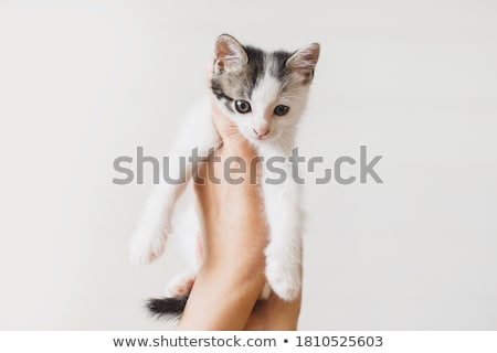 cute furry kitten stock photo © ajn