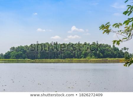 秋 · 島 · 緑 · フィールド · 木材 · 森林 - ストックフォト © capturelight