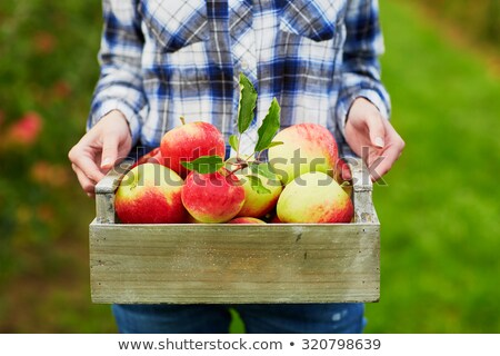 Ecological apples in a wooden crates Stock photo © jordanrusev