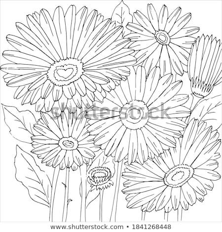 rosso · fiore · bianco · stelo · fiori · natura - foto d'archivio © sapegina