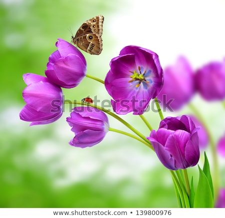 A garden with fresh blooming flowers, a butterfly and a ladybug Stock photo © bluering
