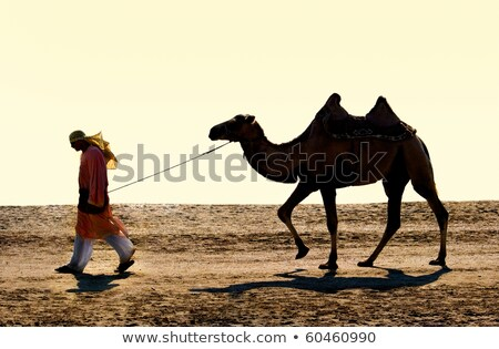 silhouettes of camels with camel drovers stock photo © gomixer
