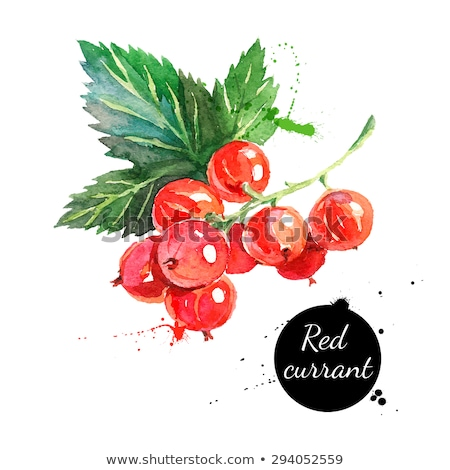 Watercolor illustration of red currant Stock photo © Sonya_illustrations