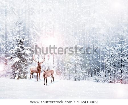 Vidám karácsony tél tájkép szarvas jelenet Stock fotó © Krisdog