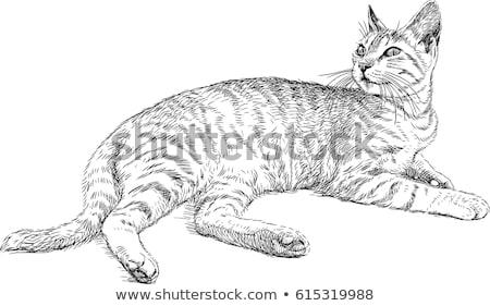 Kroki kedi vektör karalama ayarlamak karikatür Stok fotoğraf © Elensha