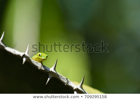 Close up view of a green Gecko in natural environnement Stock photo © lightpoet