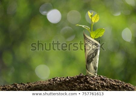 green dollar leaves money tree Stock photo © romvo