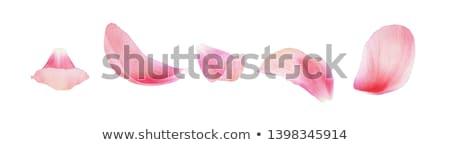 pétales · portrait · heureux · Homme · eau · pétales · de · rose - photo stock © pressmaster