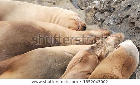多くの 野生動物 崖 実例 ツリー 背景 ストックフォト © bluering