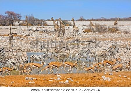 szett · stílus · vektor · állatok · különböző · üzlet - stock fotó © bluering