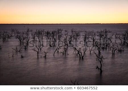 湖 古い 死んだ 木 オアシス 生活 ストックフォト © lovleah