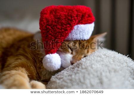 cute · cat · indossare · Hat · primo · piano - foto d'archivio © feedough