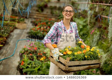 Young woman holding a box full of spring flowers in the greenhou Stock photo © boggy