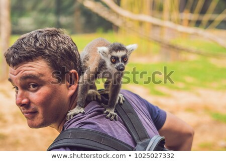 lemur climbed onto the man animal attack in the zoo stock photo © galitskaya