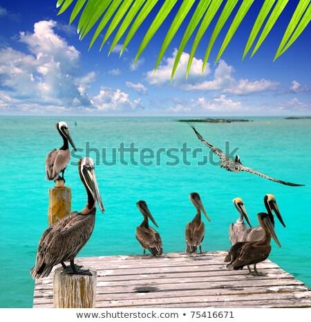 Contoy island Mexico wood pier nature reserve Stock photo © lunamarina