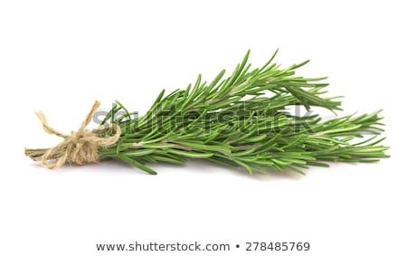 Taze biberiye bitki Stok fotoğraf © Digifoodstock