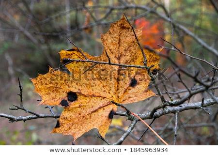 Piękna jesienią spadek sezonie charakter krajobraz tle Zdjęcia stock © artisticco