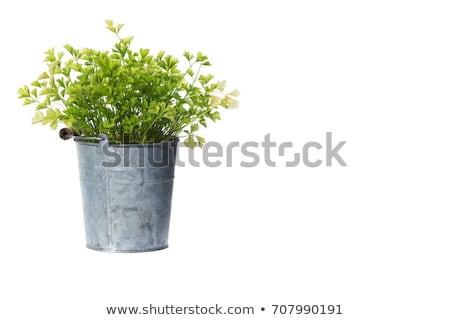 Casa planta pote sempre-viva folhas flor Foto stock © robuart