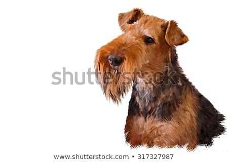 Terriër hondenras cartoon retro tekening stijl Stockfoto © patrimonio