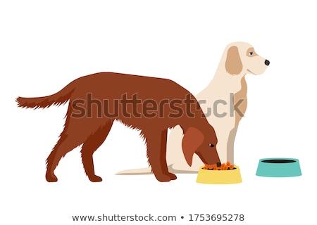 Gönüllü evsiz köpek kuru gıda Stok fotoğraf © robuart