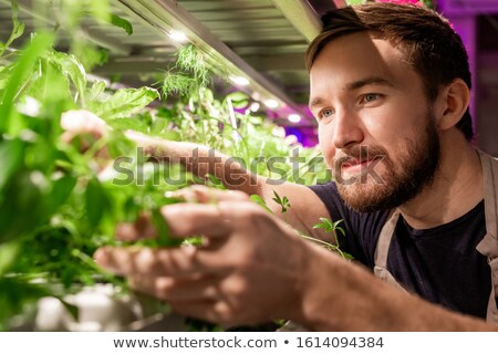 Young bearded selectionist or gardener looking at new sort of greenery Stock photo © pressmaster