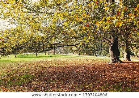 Autumn nature in park, fall leaves and trees outdoors in Milan, Lombardy region in Northern Italy Stock photo © Anneleven