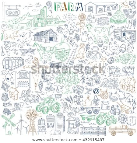 Gospodarstwa zestaw stodoła warzyw biały ilustracja Zdjęcia stock © bluering