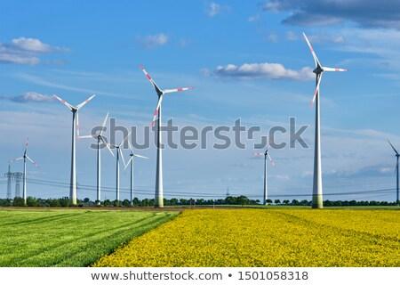 Virágzó mező szélturbinák távvezeték természet olaj Stock fotó © elxeneize