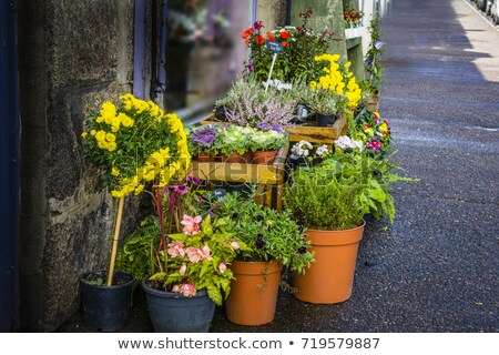 Garden violet flower in pot standing crate Stock photo © CandyboxPhoto