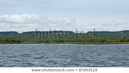 River Nile Scenery Around Murchison Falls Photo stock © PRILL