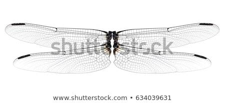 Dragonfly · aripi · set · patru · creaturi - imagine de stoc © posterize