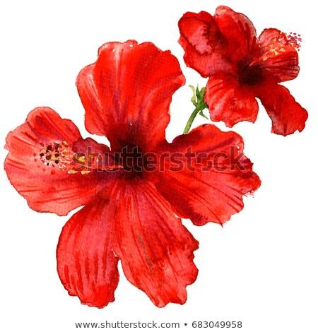 Suluboya kırmızı çiçek el yapımı soyut Stok fotoğraf © Galyna