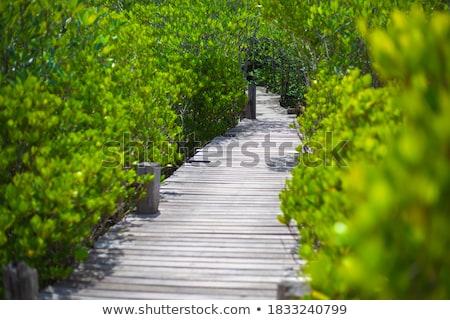 bos · pad · Thailand · licht · blad · zomer - stockfoto © rufous