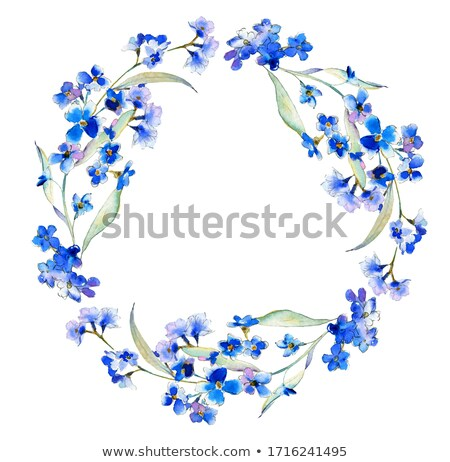 Illustration of forget-me-not Stock photo © perysty